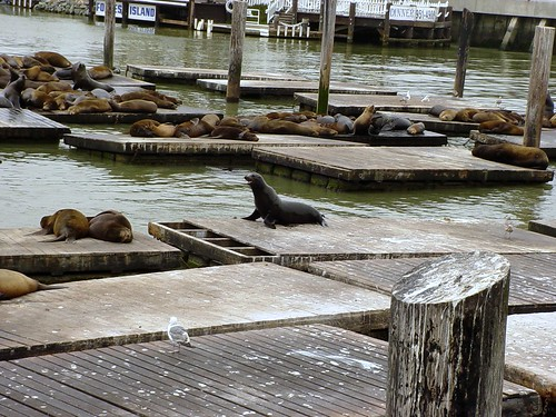 Pier 39 Sea Lions 1 | by TheOtter
