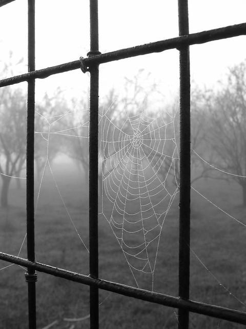 mist on a spider's nest