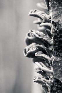 Végétale Noir Et Blanc Bertrand Dixhuit Flickr