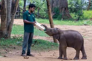 Elephant Transit Home | by seghal1