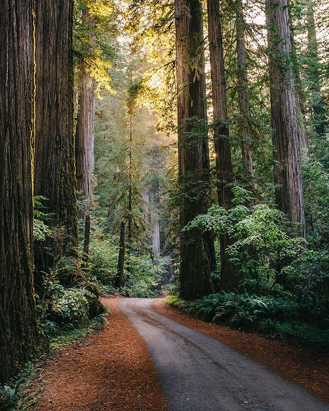 Throwback to the forests of Northern California - An epic