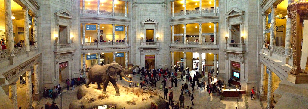 Natural Museum of Natural History in DC