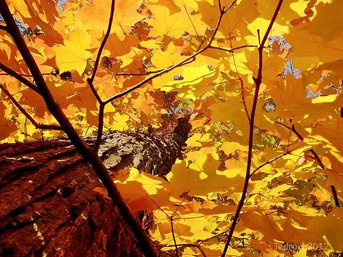 autumn ohio orange tree fall nature leaves rural golden woods scenery oakopenings mallardlake toledometroparks