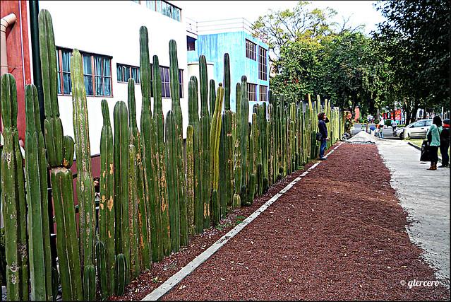 Barda perimetral Museo-estudio-casa de Frida Kahlo y Diego Rivera...P1100133E
