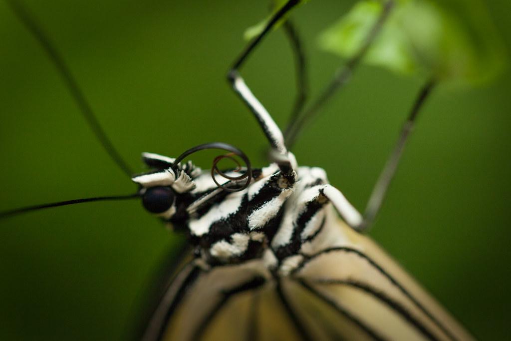 Butterfly Palace 7829