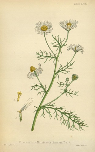 n193_w1150   by BioDivLibrary