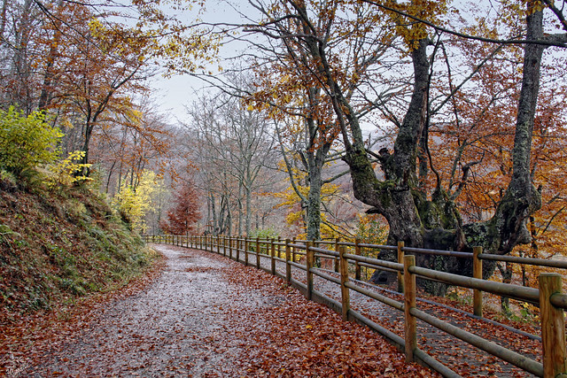 Un paseo por el otoño