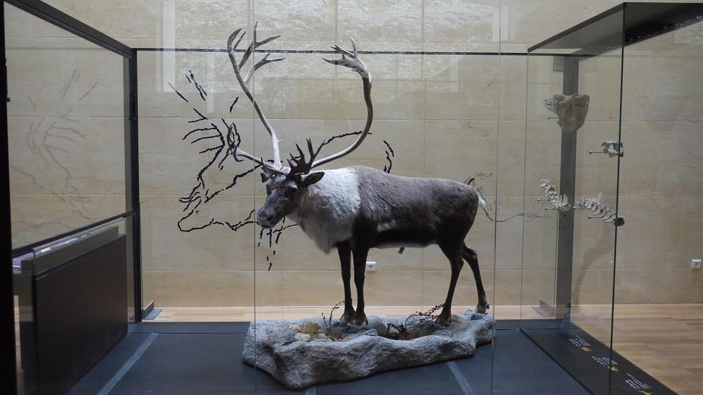 P1000372 Les Eyzies De Tayac Musée National De Préhisto Flickr