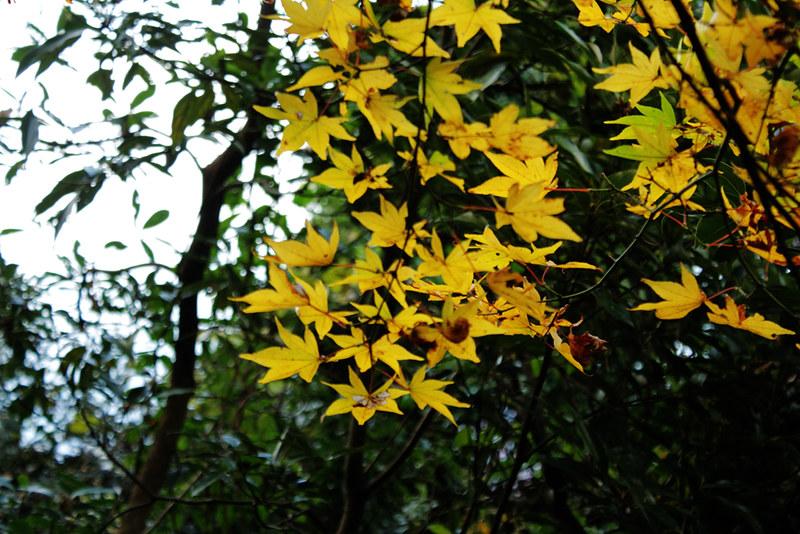 20121201_鋸山_0044