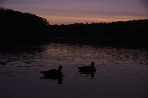 sunset sunrise dawn geese cloudy burkelake