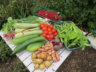 Organic vegetables from the allotment