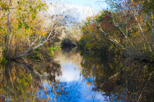 november usa fish fall leaves st rio river seasons florida johns 2012 the