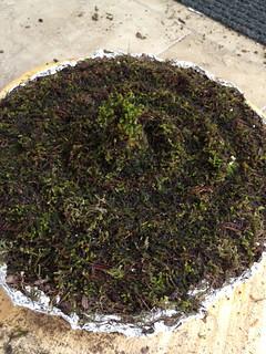 Sinc Function Moss garden   by andrewsharmon