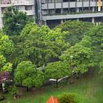 Naha (Okinawa) - 139 Rain