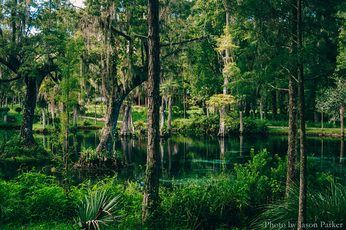 crystalsspringspreserve crystalsprings zephyrhills centralflorida florida springs water swimminghole hillsboroughriver landscape scenic nature naturalbeauty vsco vscofilm morning outdoor polarizer color