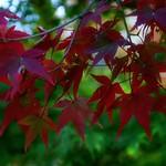 「紅赤」 東福寺 - 京都