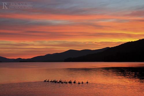 morning pink orange sun mountain lake mountains water yellow swim sunrise photography flock ducks lakegeorge ripples lakegeorgeny