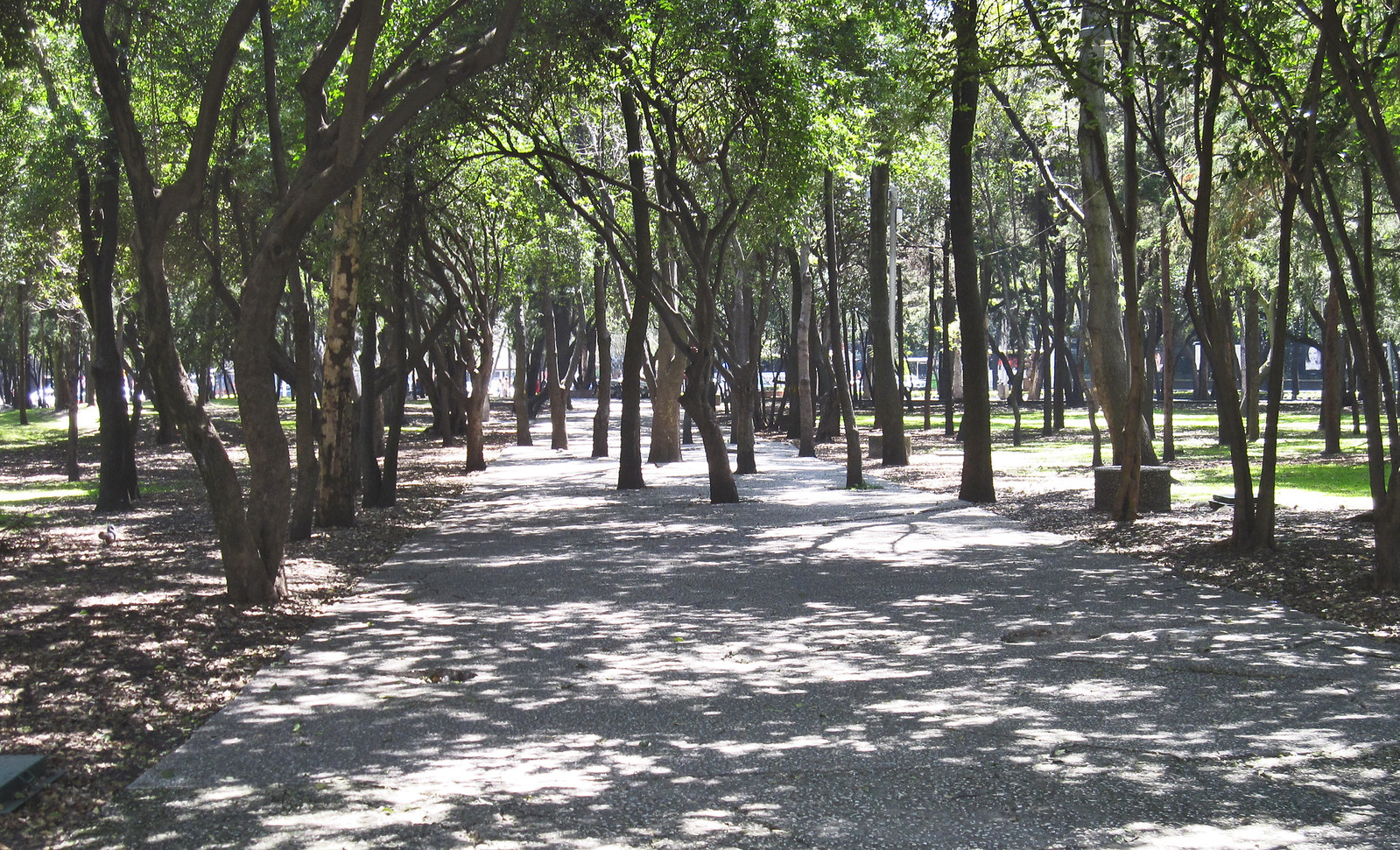 Ciudad de México 612