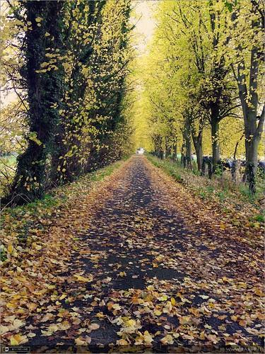 autumn ireland maynooth pathway kildare spcm