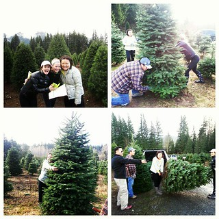 Christmas Tree Farm | by kissmywhisk