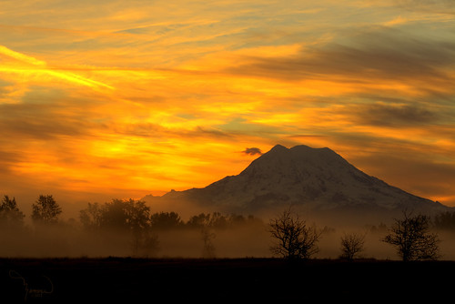 trees sun mist mountains nature silhouette fog sunrise canon landscape day atmosphere rainier washingtonstate mtrainier t4i matthewreichel
