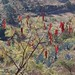 Guaje; cerca de Teozacoalco y San Isidro, entre Yutanduchi de Guerrero y San Miguel Piedras, Región Mixteca, Oaxaca, Mexico por Lon&Queta