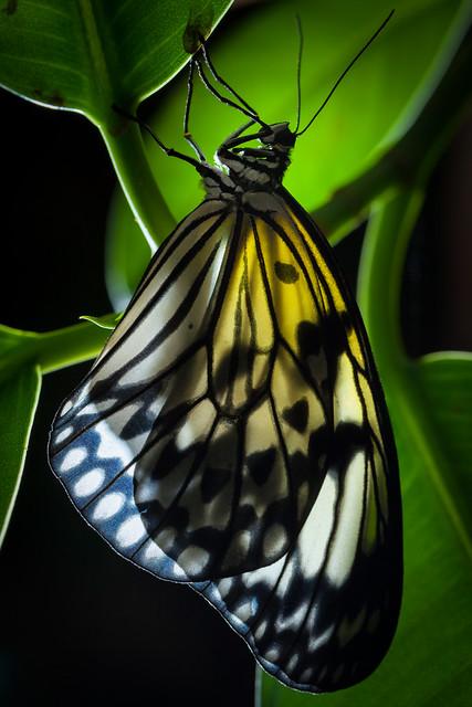 Butterfly Palace 8151