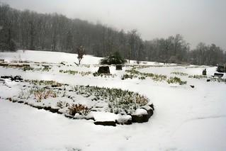 Presby Iris Gardens ~ November Snowfall