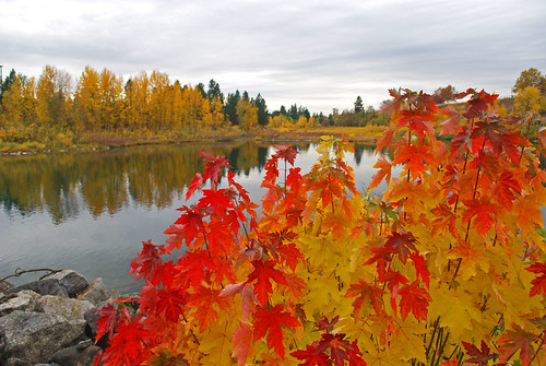 autumn trees orange color reflection fall water leaves yellow reflections river walking outdoors photography photo maple nikon spokane photographer pacific northwest photos hiking photograph inland amateur junglejims d60