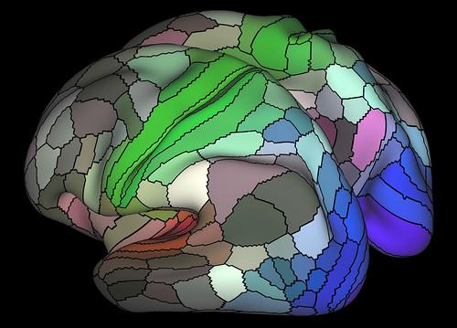 Map of brain cortex