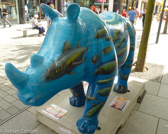 Rhinos 1