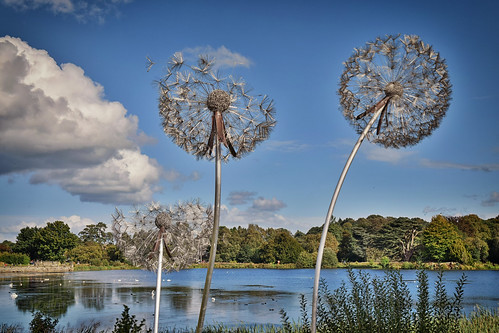 Dandelion Sculptures (25/09/2016)