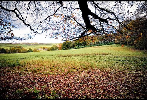 uk autumn england home nikon lancashire 2012 burnley d90 towneley towneleypark nikond90 myfreecopyright swjuk nov2012 thanetlee