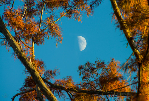 blue sky orange moon mississippi afternoon unitedstates foliage madison cypress needles quartermoon fav10