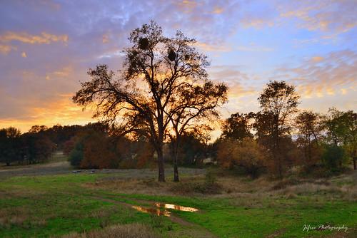 california travel sunset tree photography nikon auburn nevadacounty d5100 jifree