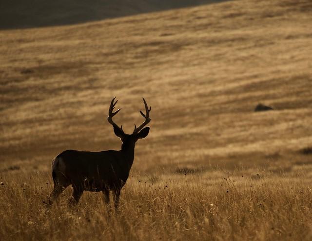 Where the deer and the antelope roam.....