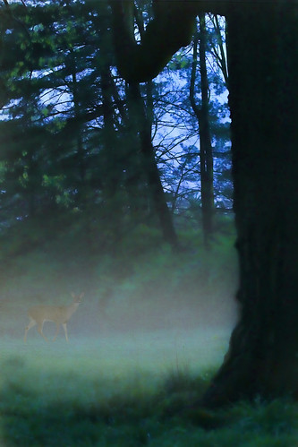 trees ohio sky mist green home field grass fog evening framed cincinnati doe deer bushes hss sliderssunday