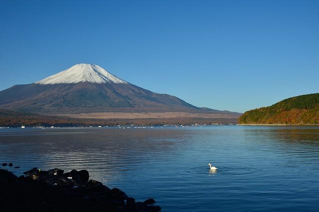 Mt Fuji and the Swan