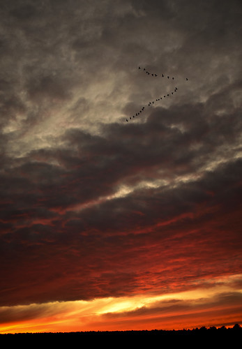 sunset sky orange clouds norfolk roost pinkfootedgeese stunningskies nikond7000 mygearandme mygearandmepremium mygearandmebronze