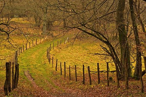 road trees grass forest fence woods sweden meadow bushes halland mygearandme mygearandmepremium
