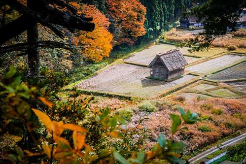world autumn light shadow red house mountain tree heritage fall field yellow japan landscape scenery village view rice top unesco shade frame lonely leafs gifu shirakawago foreground hida gassho