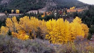 Fall Color, Lake Chelan | by brewbooks