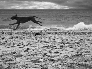 Dog Running on Beach | by Nick Page Photos