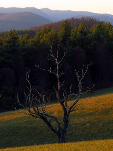 sunset tree northcarolina blueridgeparkway westernnorthcarolina southernappalachians mountjeffersonoverlook canonpowershotsx40hs