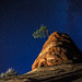 Iconic Zion Crooked Tree by Laura Zirino, here every now and then
