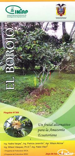 El Borojó un frutal promisorio de la Amazonía Ecuatoriana