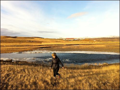 travel iceland europe fields agriculture hrútafjörður