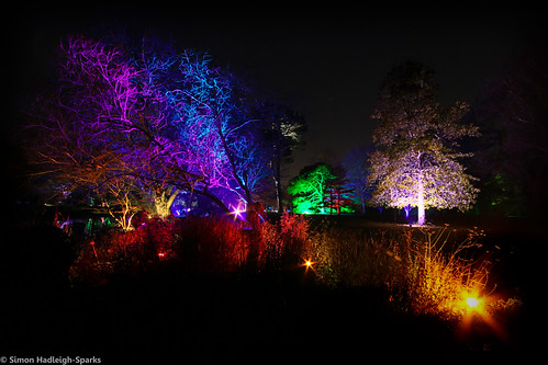 Syon Park Gardens London Enchanted Woodland by Simon Hadleigh-Sparks | by Simon Hadleigh-Sparks