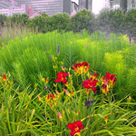 Great Gardens Lurie_ 2016