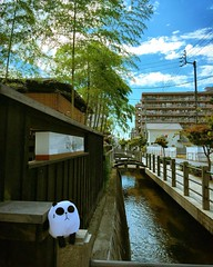 Judgmental panda (my grumpy plush toy) posed for me in the old alley next to a famous Dogo Onsen in Matsuyama city. #japan #japanese #backstreet #cityscape #japonia #instarchitecture #matsuyama #ehime #shikoku #instalike #instagram #japaneseculture #japan